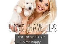 Dog Training Tips + Tricks + Ideas / Dog Training Tips + Ideas + Tricks | Everything from new puppy potty training, how to stop puppy biting, and tips to help you stop nuisance barking for good. If you catch your dog chewing on something he shouldn't, interrupt the behavior with a loud noise. You'll also discover dog anxiety training tips and do awesome tricks for fun.