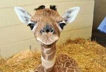 Animals; So Cute!