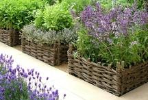 Herb & Vegetable Gardens
