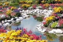 Natural Beauty / Naturally Enhanced Environment