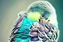 colores llamatibos