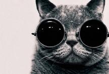 Crazy Cat Lady Stuff
