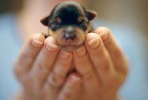 Hund aufs Herz / treue Seelenbegleiter