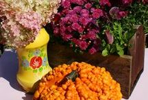 Fall Fabulosity! / Warm, rich color, freakish fun and tasty treats ... to dieeee for!