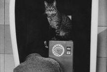 Martine Frank 1938-2012 / Photographe belge. Née à Anvers - morte à Paris à 74 an. Elle est la dernière femme de Henri Cartier-Bresson. en 1964, photographe officielle de la compagnie de théâtre Théâtre du Soleil d'Ariane Mnouchkine. en 1970, intègre l'agence VU avant de devenir l'une des cofondatrices de l'agence Viva en 1972. En 1983, elle devient membre de l'agence Magnum Photos. Wiki