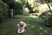 Hundezaun anneau / Zäune und Gitter für Ihren Garten