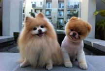 Puppies / Dogs