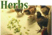 animal herbalist