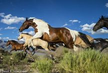 Horses / Stunning horses or horse related photo's.