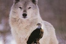 Wolf & Eagle / My birth & power/spirit totem animals <3