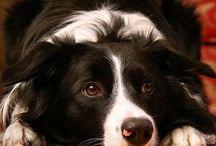 My fav dog breeds