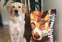 Dog Food Recipes / The bond with your dog is powerful. We feel their devotion and take pride in their vibrant health. That's why we created a dog food specifically for them. Solid Gold holistic dog foods provide a unique blend of natural ingredients with added vitamins, minerals and amino acids for your dogs optimal growth and development—using Earth's timeless wisdom to keep them happy and healthy.