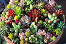 Terrarium / All you need to know about terrarium. Whether you are a beginner or have been doing it for a while, you can find so many ideas and ways to experience your very own terrarium, what to plant and how to go about it.