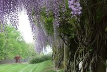 Giardino&Orto: Idee d'arredo / Garden & Garden: Ideas furnishing