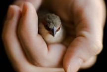 A Handful of / Tiny animals that can fit in your hand