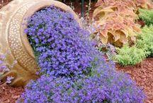Garden Retreat / Garden Ideas