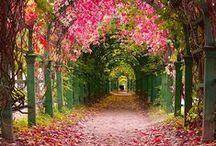 Tree Tunnel
