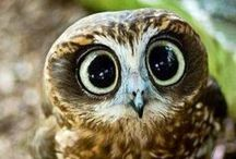 ♥ OWL ♥ / Owls