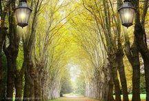 A Breath of Fresh Air / Nature