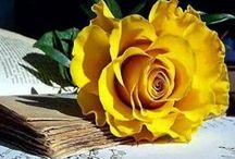 Цветы / Фотоальбом
