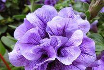 Bitkiler / Bitkileri sevme amaçlı fotoğraf ya da fotoğraflar.