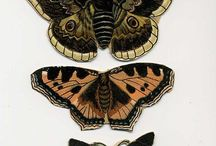 Butterflies. / Polillas, libélulas, mariposas.