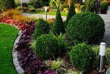 растения