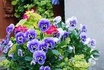 Pilar navarro llarpi en pinterest for Jardineria navarro