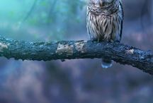 Owls / Beautiful owls
