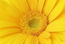 Glorious  Golden Hues / A collection of photos of things which range in color from white to gold