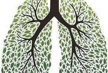 Lungs / Ideas, videos, articles about the lungs, breathing, etc.
