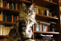 Kitty Cats / Mrrrrr yip mrrrow. / by Myrna Traylor