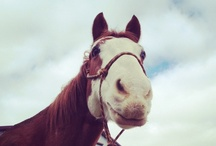 Horsing Around / We love horsing around at Providence Hill Farm! Pin and share your favorite horse pictures. Feel free to add new pinners. / by Providence Hill Farm