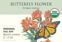 Milkweed Sales page / aStore sales page linking you to the products you can use. You may like this board if you have or want a pollinator garden. Do you raise monarch, queen or soldier butterflies then grow milkweed plants from seed ordered here.