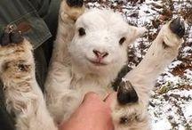 Furry Friends / 可愛い動物たちが集まる不思議なトピ