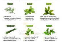 Cuisine aux plantes / Tous les bienfaits des plantes et végétaux en cuisine !