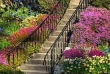 I Love Stairs!  / by Andrea T