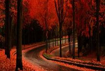 Autumn / by Emily Mitchell