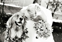 Engagement/wedding photos / by Stacy Suhay