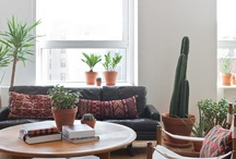 House Plants / by Emily