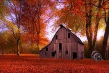Barns and such / by Dayle McEwen