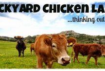 Blog Posts @ Backyard Chicken Lady