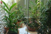 Casa: Jardim de inverno - Winter garden