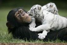Animals ღ ツ