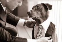 Mariage : Animaux