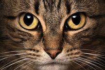 ☆ Cats  =^..^= / ♡♡