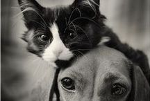 <<kitcat>>