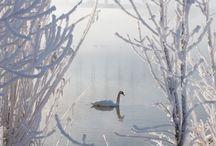 ☆ Winter  ***
