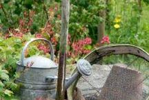 Kert és kertészkedés