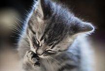 Animals are cute <3